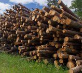 نمایشگاه بین المللی چوب و بیوانرژی WOOD AND BIOENERGY 2019 فنلاند