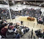 نمایشگاهی دامپروری CANADIAN WESTERN AGRIBITION 2019 کانادا