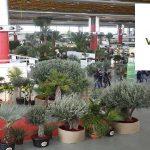 ویزای نمایشگاه گیاهان زینتیVIVERALIA 2020 اسپانیا