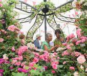 نمایشگاه گل و گیاه HAMPTON COURT PALACE FLOWER SHOW 2020 انگلستان